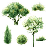 Insieme degli alberi e dei cespugli verdi Fotografia Stock