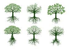 Insieme degli alberi e delle radici verdi Illustrazione di vettore Fotografie Stock Libere da Diritti