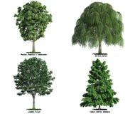 Insieme degli alberi isolati su bianco Immagine Stock