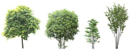 Insieme degli alberi isolati su fondo bianco Immagini Stock Libere da Diritti