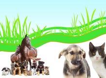 Insieme degli animali Fotografia Stock Libera da Diritti