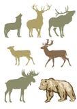 Insieme degli animali della foresta Fotografie Stock Libere da Diritti