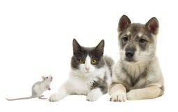 Insieme degli animali domestici Immagini Stock