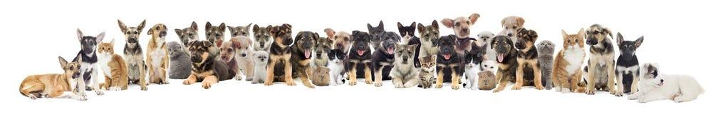 Insieme degli animali domestici Fotografia Stock