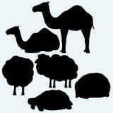 Insieme degli animali Tartaruga, cammelli, pecore ed istrice Immagine Stock