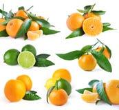 Insieme degli aranci e della calce Fotografia Stock