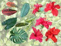 Insieme degli elementi della pianta tropicale - fiori e foglie Fotografia Stock