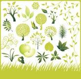 Insieme degli elementi di disegno. Accumulazione verde. Immagini Stock