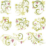 Insieme degli elementi di disegno degli acini d'uva Fotografia Stock Libera da Diritti