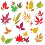Insieme degli elementi di disegno dei fogli di autunno di vettore Fotografie Stock Libere da Diritti