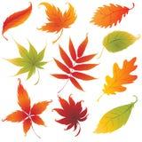 Insieme degli elementi di disegno dei fogli di autunno di vettore illustrazione di stock
