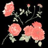 Insieme degli elementi di disegno floreale Fotografia Stock