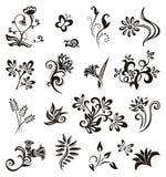 Insieme degli elementi di disegno floreale Immagini Stock Libere da Diritti
