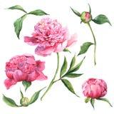 Insieme degli elementi di progettazione floreale dell'acquerello Fotografie Stock