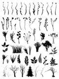 Insieme degli elementi e dei mazzi floreali Fotografia Stock Libera da Diritti