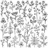 Insieme degli elementi floreali disegnati a mano Fotografie Stock