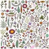 Insieme degli elementi floreali disegnati a mano Immagini Stock