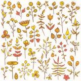 Insieme degli elementi floreali disegnati a mano Fotografia Stock Libera da Diritti