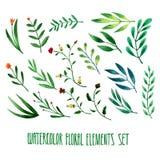 Insieme degli elementi floreali disegnati a mano dell'acquerello Fotografia Stock Libera da Diritti