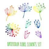 Insieme degli elementi floreali disegnati a mano dell'acquerello Fotografia Stock
