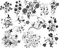 Insieme degli elementi floreali per il disegno,   Fotografia Stock Libera da Diritti