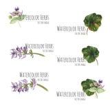 Insieme degli elementi floreali per le insegne e la pubblicità Fotografie Stock