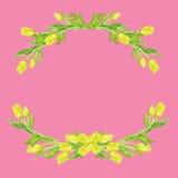 Insieme degli elementi floreali - tulipano dell'acquerello Fotografia Stock