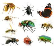 Insieme degli insetti Immagine Stock Libera da Diritti