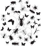 Insieme degli insetti Fotografia Stock Libera da Diritti