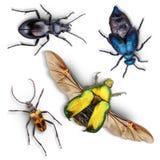 Insieme degli insetti Immagini Stock