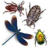 Insieme degli insetti Immagini Stock Libere da Diritti