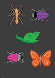 Insieme degli insetti Fotografie Stock