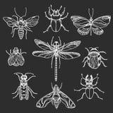 Insieme degli insetti bianchi su fondo nero Simbolo di vettore Fotografia Stock Libera da Diritti