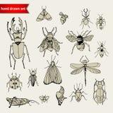 Insieme degli insetti di scarabocchio, schizzo Immagine Stock