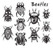 Insieme degli insetti disegnati a mano dell'inchiostro, scarabei Fotografie Stock Libere da Diritti