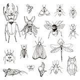 Insieme degli insetti, schizzo Immagini Stock