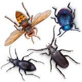 Insieme degli insetti su bianco Fotografia Stock Libera da Diritti