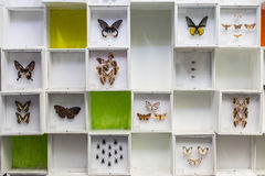 Insieme degli insetti su fondo bianco Fotografia Stock