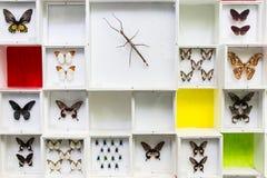 Insieme degli insetti su fondo bianco Fotografia Stock Libera da Diritti