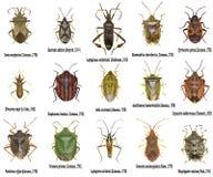 Insieme degli insetti veri di Europa Fotografie Stock