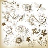 Raccolta degli elementi floreali di vettore di turbinio per il disegno royalty illustrazione gratis