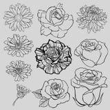 Insieme degli schizzi allineati isolati del fiore Oggetti isolati Fiori isolati Fotografia Stock Libera da Diritti