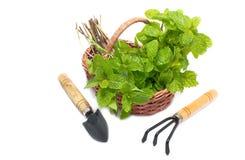 Insieme degli strumenti di giardinaggio e della merce nel carrello della menta Fotografia Stock