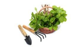 Insieme degli strumenti di giardinaggio e della merce nel carrello della menta Fotografie Stock