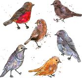 Insieme degli uccelli del disegno dell'acquerello Fotografia Stock Libera da Diritti