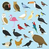Insieme degli uccelli domestici e degli animali tropicali avvoltoi, pappagallo di cacatua bucero del rinoceronte, tucano di toco illustrazione di stock