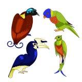 Insieme degli uccelli esotici Immagine Stock