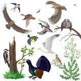 Insieme degli uccelli selvaggi Fotografia Stock Libera da Diritti