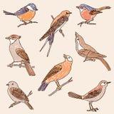 Insieme degli uccelli selvaggi tirati Fotografia Stock