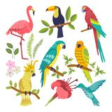 Insieme degli uccelli tropicali Fotografie Stock